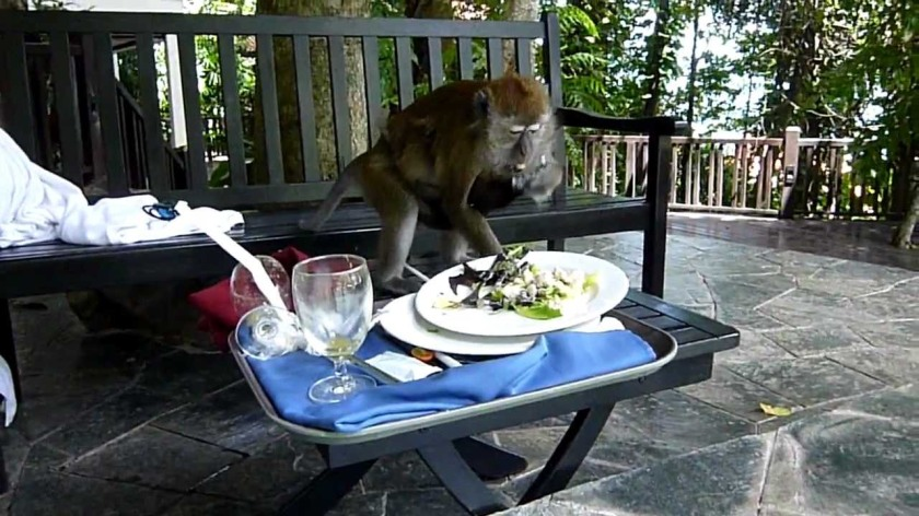 monkey stealing food